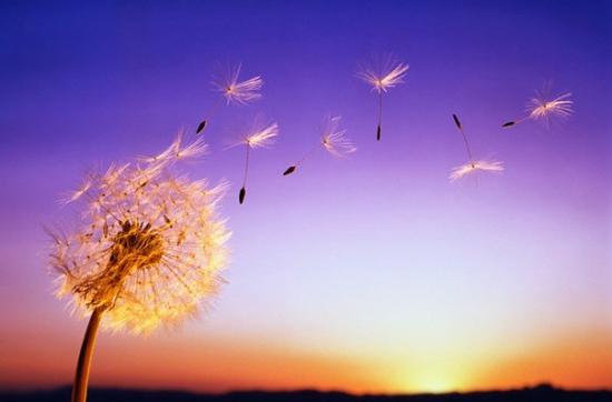 18 января 2021 года –7 лунный день, символ дня – Роза ветров