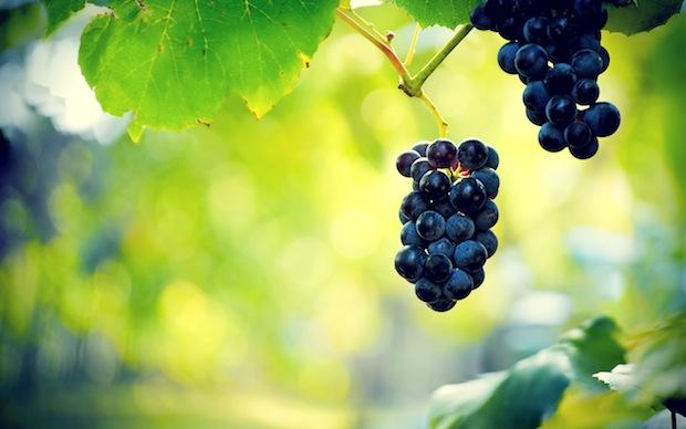 10 февраля 2020 года – 17 лунный день, символ дня – Виноградная гроздь