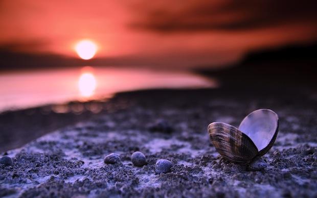18 февраля 2020 года – 25 лунный день, символ дня – Раковина, Черепаха