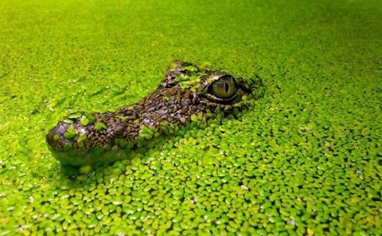 08 мая 2018 года – 23 лунный день, символ дня – Химера, Крокодил Маккара