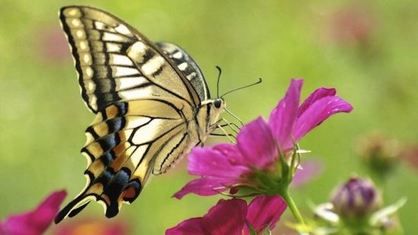 18 июля 2019 года – 16 лунный день, символ дня – Голубь, Бабочка