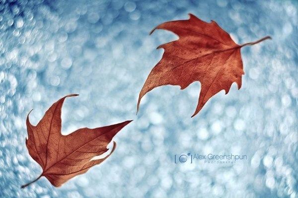 15 сентября 2018 года – 07 лунный день, символ дня – Роза ветров, Петух