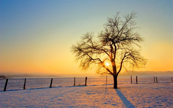 10 декабря 2018 года – 4 лунный день, символ дня – Древо познания