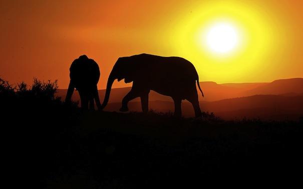 28 марта 2019 года – 22 лунный день, символ дня – Слон, Ганеша