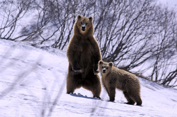 29 января 2019 года – 24 лунный день, символ дня – Медведь, Гора