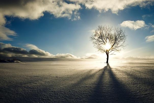 02 декабря 2016 года – 4 лунный день, символ дня – Древо познания