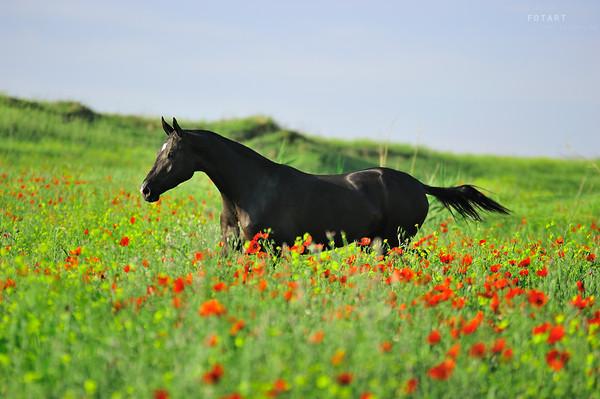 04 июля 2018 года – 21 лунный день, символ дня – Табун лошадей