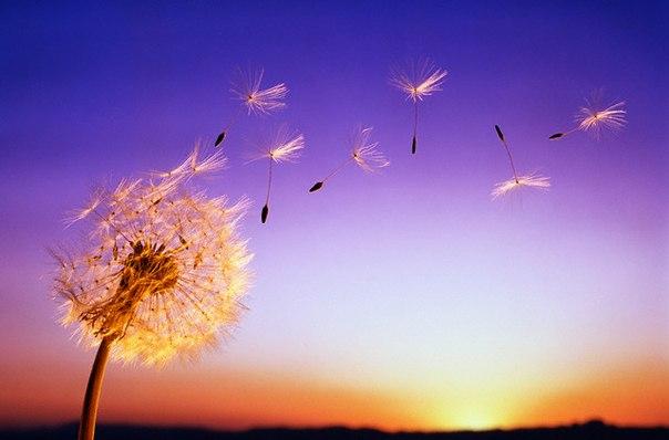 04 марта 2017 года – 7 лунный день, символ дня – Роза ветров