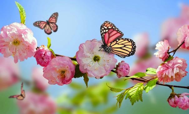 29 марта 2021 года – 16 лунный день, символ дня - Бабочка