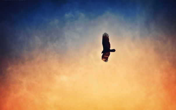 21 августа 2019 года – 20 лунный день, символ дня – Орел, Муза