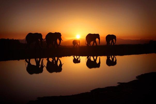07 мая 2018 года – 22 лунный день, символ дня – Слон, Ганеша