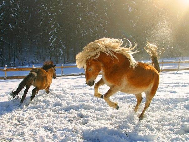 06 февраля 2018 года – 21 лунный день, символ дня – Храм, Табун лошадей