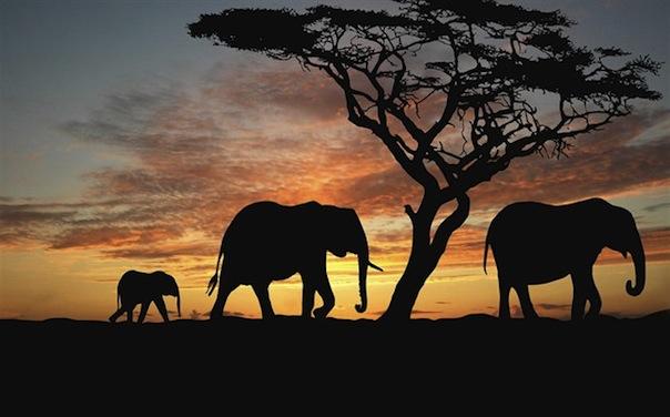 07 февраля 2018 года – 22 лунный день, символ дня – Слон, Ганеша