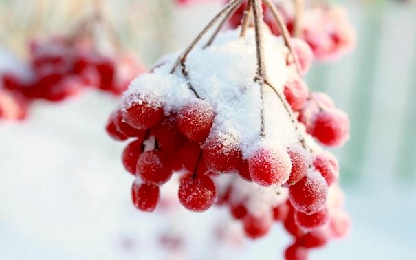16 декабря 2016 года - 17 лунный день, символ дня - Виноградная гроздь