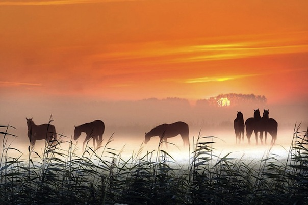 21 лунный день, символ дня – Табун лошадей