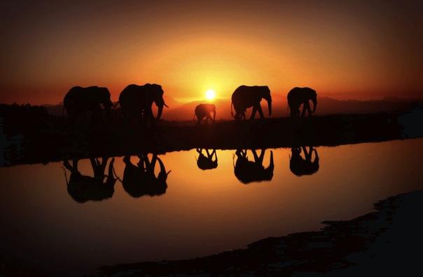 26 мая 2019 года –22 лунный день, символ дня – Слон, Ганеша