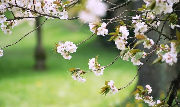 28 мая 2017 года – 4 лунный день, символ дня – Древо познания