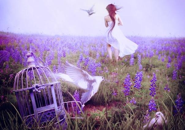 16 лунный день, символ дня – Голубь, Бабочка