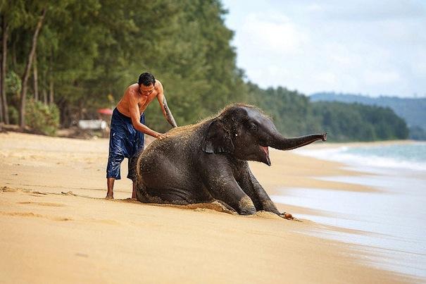 22 лунный день, символ дня – Слон, Ганеша