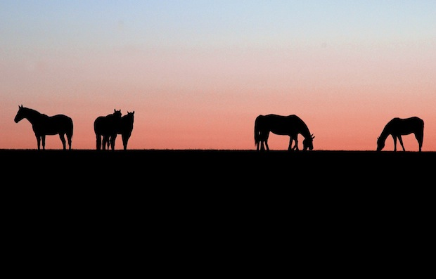 23 августа 2016 года – 21 лунный день, символ дня – Храм, Табун лошадей