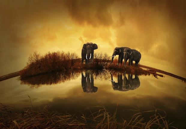 24 августа 2016 года – 22 лунный день, символ дня – Слон, Ганеша