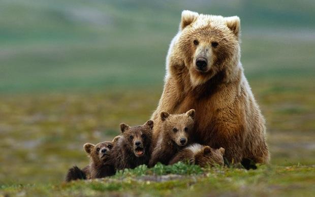 07 июля 2018 года – 24 лунный день, символ дня – Медведь, Гора
