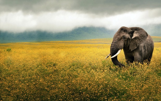 22 октября 2016 года — 22 лунный день, символ дня – Слон, Ганеша