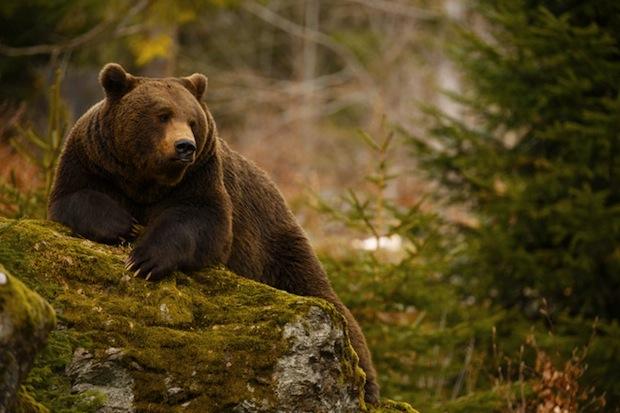 25 сентября 2016 года – 24 лунный день, символ дня – Медведь, Гора
