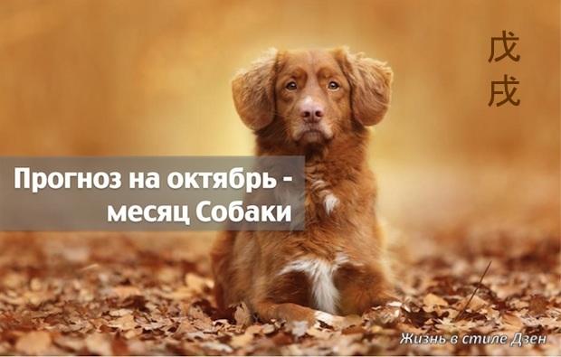 Прогноз Фэн-шуй на октябрь – месяц Земляной Собаки