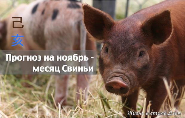 Прогноз Фэн-шуй на ноябрь 2016 года – месяц Земляной Свиньи