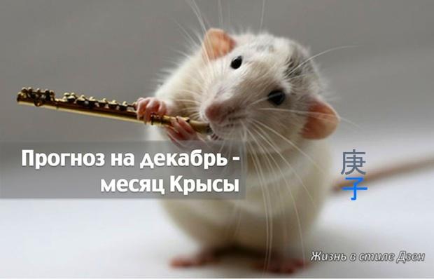 Прогноз Фэн-шуй на декабрь 2016 года – месяц Металлической Крысы