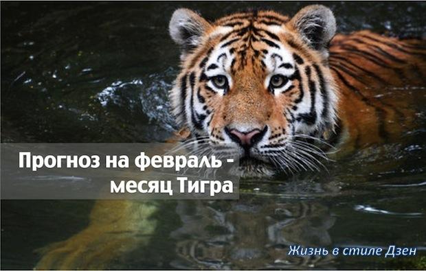 Прогноз Фэн-шуй на февраль 2017 года – месяц Водяного Тигра