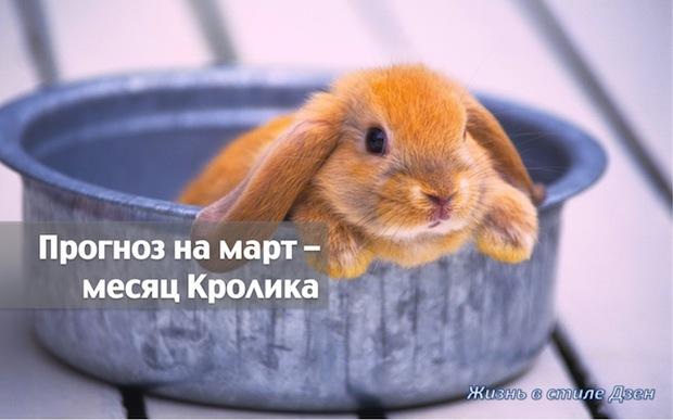Прогноз Фэн-шуй на март 2017 года – месяц Водяного Кролика