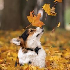 Прогноз Фэн-шуй на октябрь 2017 года – месяц Металлической Собаки