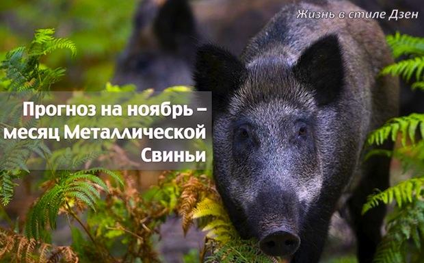 Прогноз Фэн-шуй на ноябрь 2017 года – месяц Металлической Свиньи