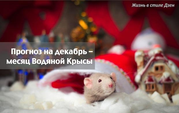 Прогноз Фэн-шуй на декабрь 2017 года — месяц Водяной Крысы