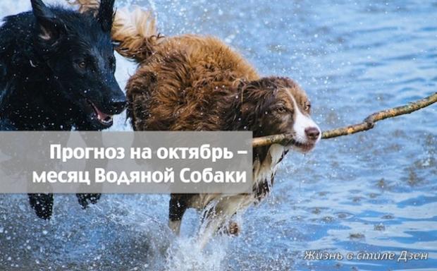 Прогноз Фен-шуй на октябрь 2018 года — месяц Водяной Собаки