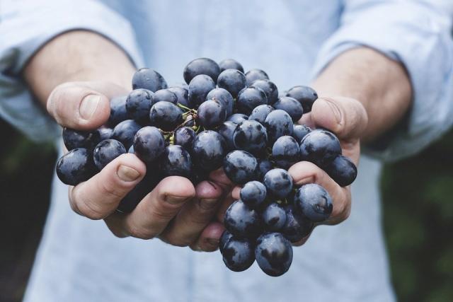 24 ноября 2018 года – 17 лунный день, символ дня – Виноградная гроздь