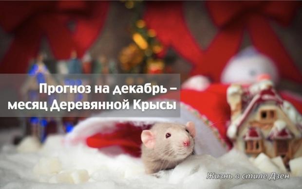 Прогноз Фен-шуй на декабрь 2018 года — месяц Деревянной Крысы