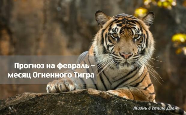Прогноз Фен-шуй на февраль 2019 года — месяц Огненного Тигра
