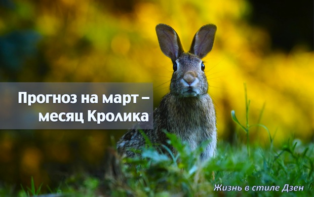 Прогноз Фен-шуй на март 2019 года — месяц Огненного Кролика