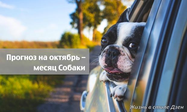 Прогноз Фен-шуй на октябрь 2019 года – месяц Деревянной Собаки