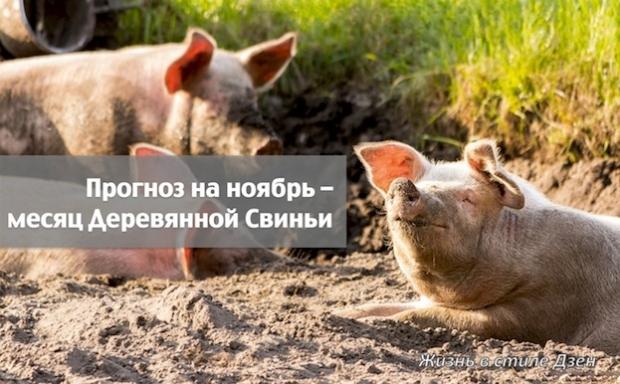 Прогноз Фен-шуй на ноябрь 2019 года – месяц Деревянной Свиньи
