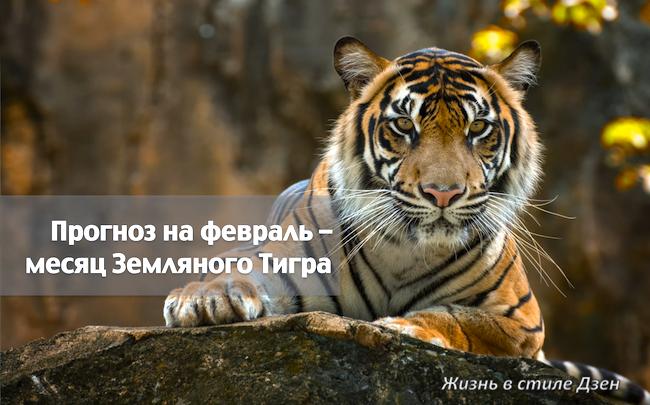Прогноз Фен-шуй на февраль 2020 года – месяц Земляного Тигра