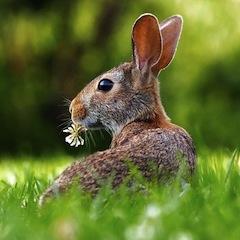 Прогноз Фен-шуй на март 2020 года – месяц Земляного Кролика