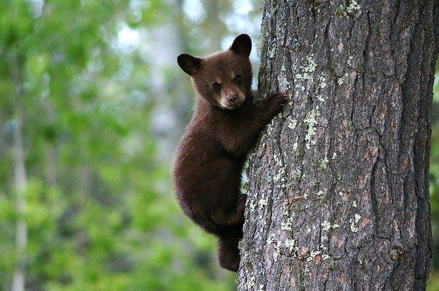 17 апреля 2020 года – 24 лунный день, символ дня - Медведь, Гора