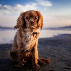 Прогноз Фен-шуй на октябрь 2020 года – месяц Огненной Собаки