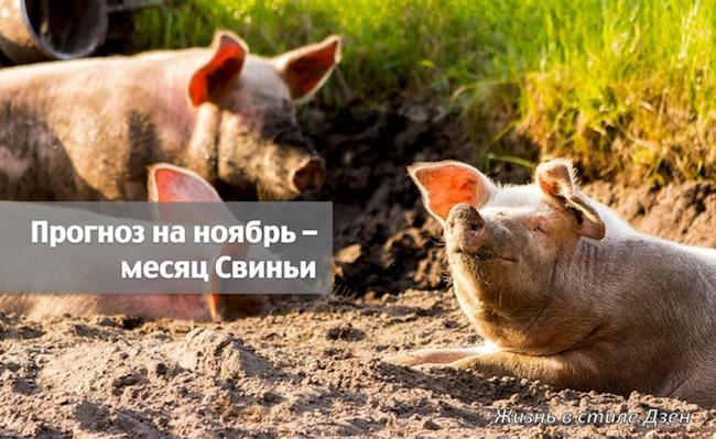 Прогноз Фэн-шуй на ноябрь 2020 года – месяц Огненной Свиньи