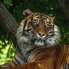 Прогноз Фэн-шуй на февраль 2021 года – месяц Металлического Тигра