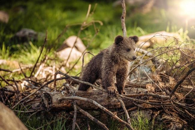 05 мая 2021 года – 24 лунный день, символ дня – Медведь, Гора